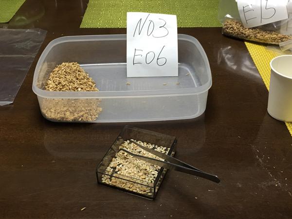 玄米・籾殻選別